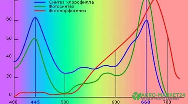 Фитолампа для растений: какие виды, что выбрать?