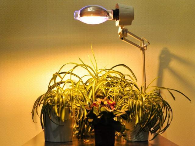 Люминесцентные лампы для растений: какие выбрать?