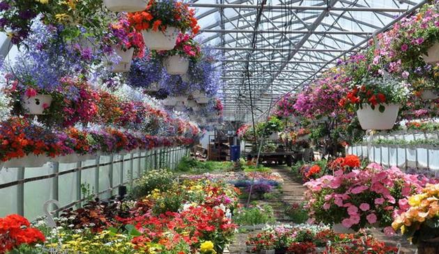 Ультрафиолетовая лампа для растений: польза, вред и выбор