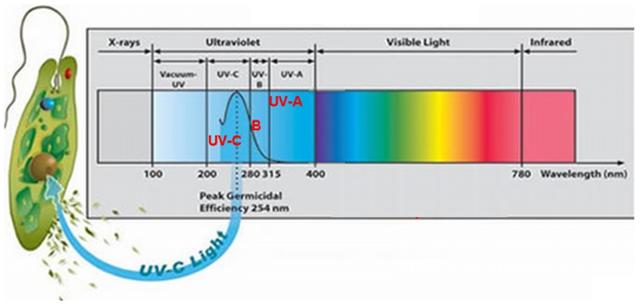 Бактерицидные лампы закрытого типа - принцип работы, как выбрать